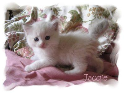 6 wk Jacqie 1