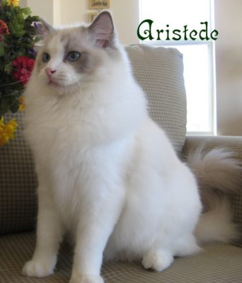 Aristede_cat