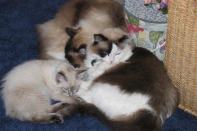 Dudley, Ponette, Josette