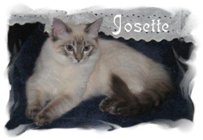 Josette_cat