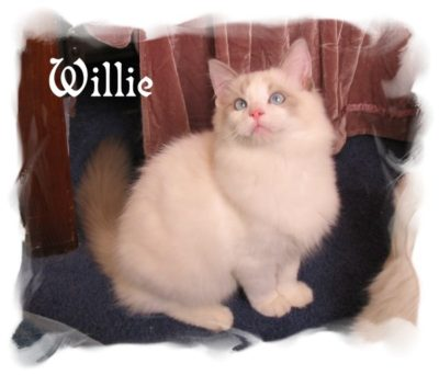 Willie_cat